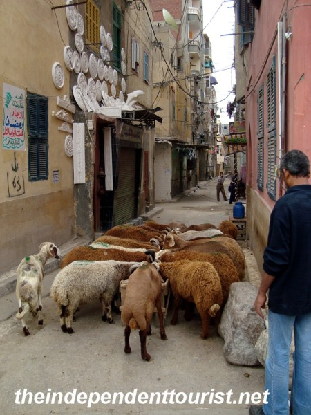 Street scene in Alexandria.