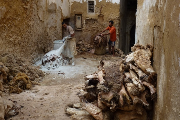The recently skinned sheep hides await the first step in the processing.