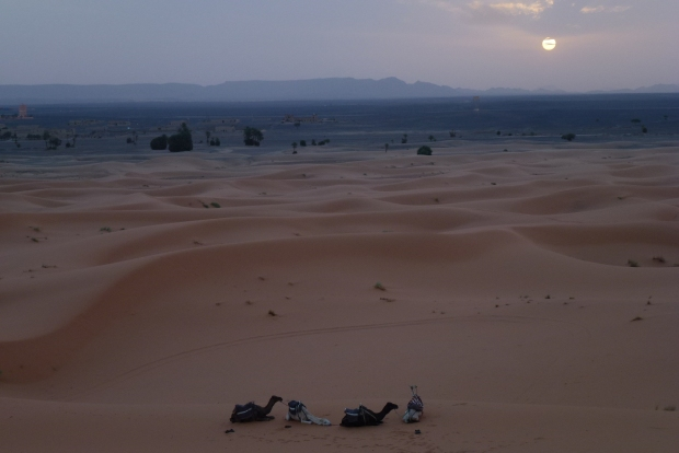 A view of the Erg Chebbi dunes at sunset.