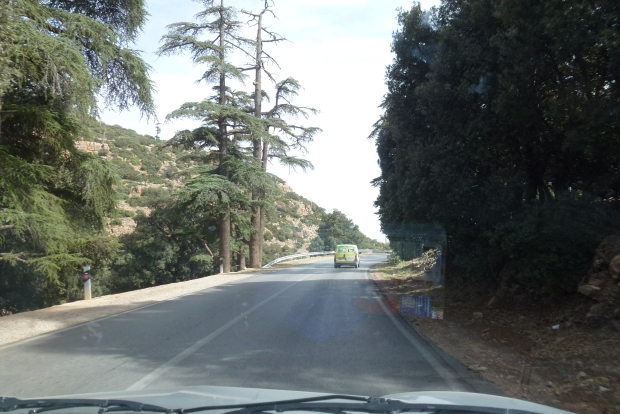 Driving through the forest in the Atlas Mountains.