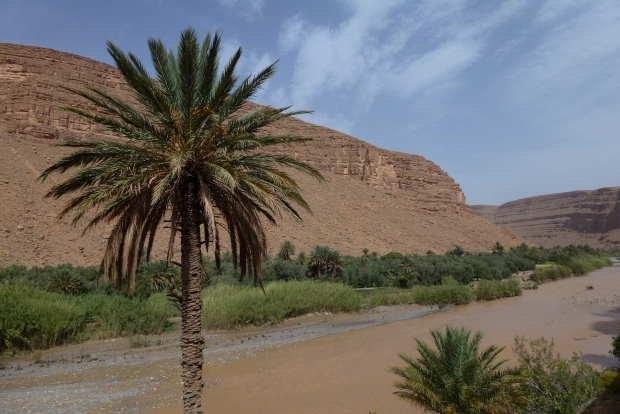 One of the many contrasts on the way to Merzouga - palmeries (oases) with the desert background.