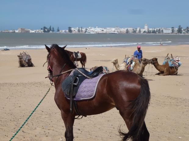 Essaouira Beach (29)
