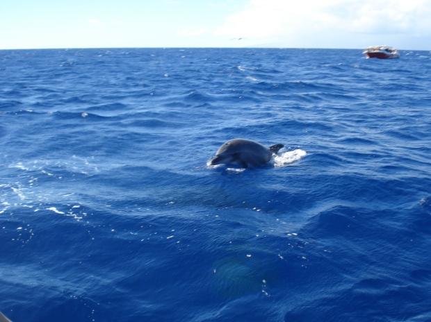 Los Gigantes Dolphin (2)