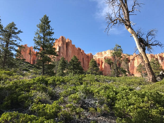 Riggs Spring Loop Bryce Canyon