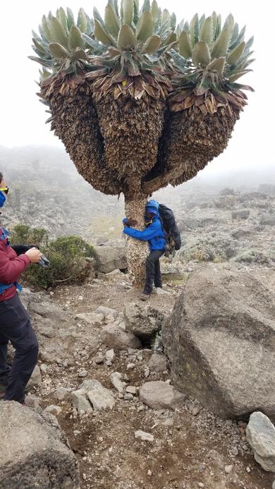 Climbing Mt. Kilimanjaro.