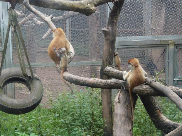 Chongqing Zoo, China
