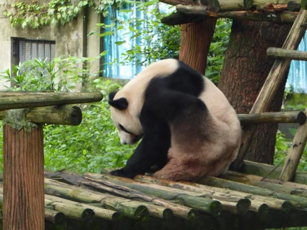 Chongqing Zoo9