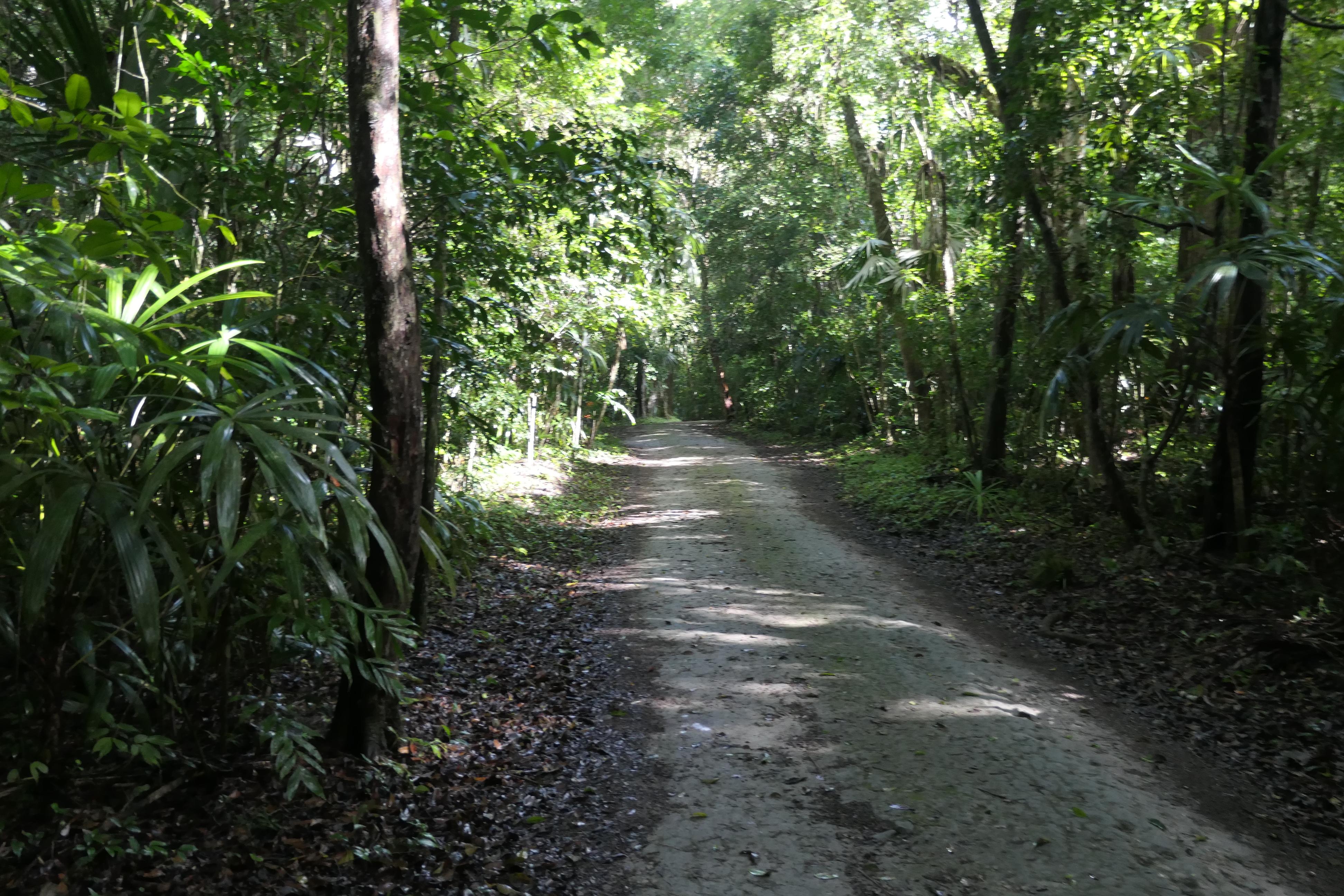 Guatemala Tikal Ruins Park 3